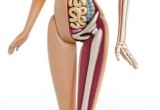 Anatomia-de-Barbie