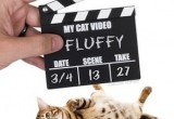 claqueta-cine-videos-gatos 1