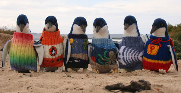 jerseys-lana-pinguinos